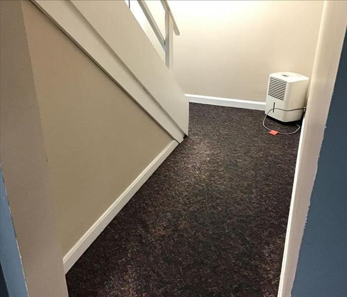 Stairwell carpet and drywall affected by sewer